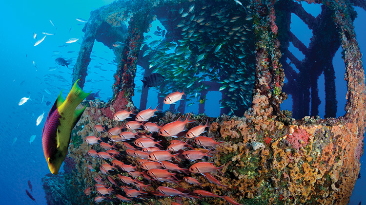 Specialty Wreck Diving